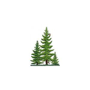 Pine group